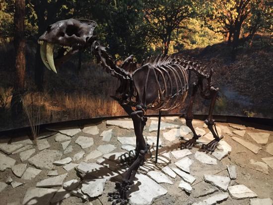 Museo de Paleontologia de Guadalajara