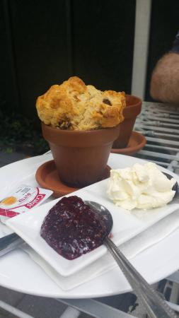 Ohaupo, New Zealand: Date scone with Jam and Cream