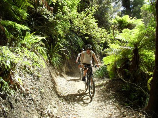 Ohakune, New Zealand: native bush
