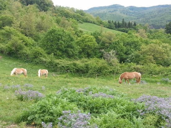 Zdjęcie Agriturismo Il Cornacchino