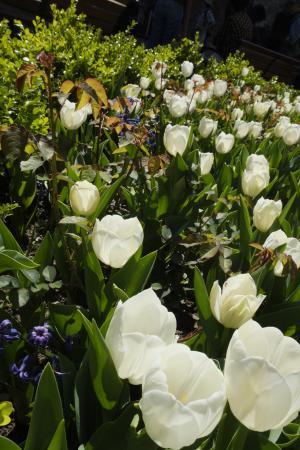 Topkapi Palace: White Tulips
