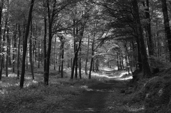 Mullaghmeen Forest Photo