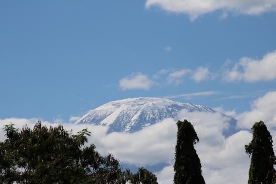 Hartebeest View Lodge: Blick von der Dachterrasse auf den Mt. Kilimanjaro