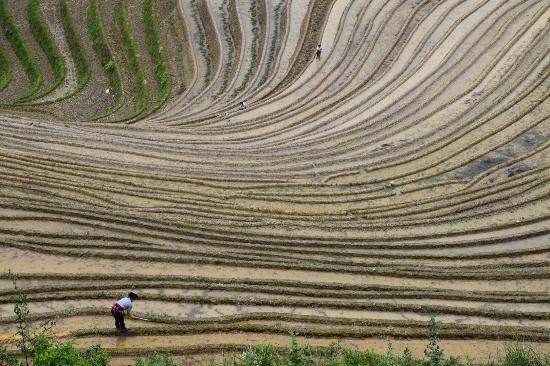 Longsheng County, Cina: ヤオ族の棚田