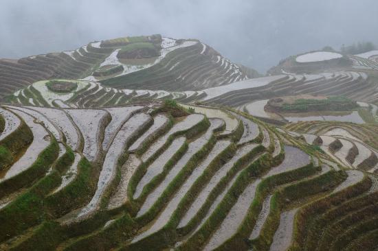 Longsheng County, Cina: トン族の棚田