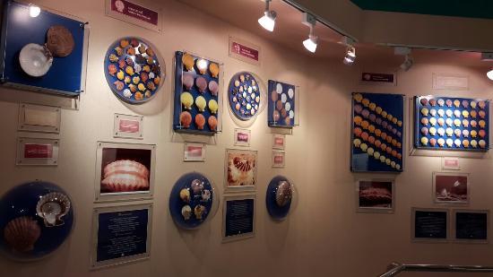 Shell World Museum: 20160528_124526_large.jpg