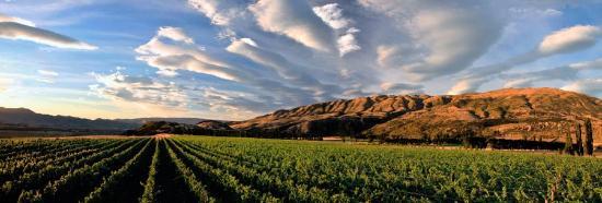 Central Otago, Nowa Zelandia: Archangel Vineyard