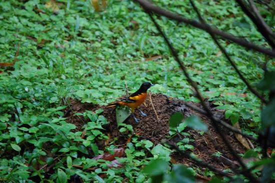 La Virgen, Costa Rica: Prachtige vogel spotplek