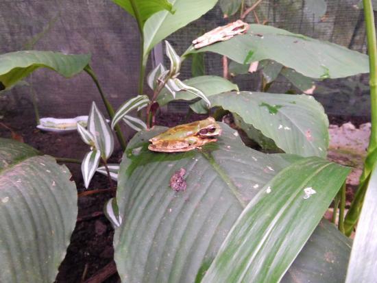 El Castillo, Costa Rica: Kikker