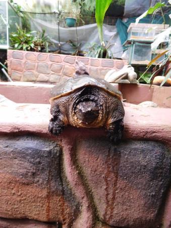 El Castillo, Costa Rica: Schildpad