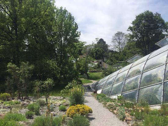 Botanical Garden (Botanischer Garten): photo2.jpg