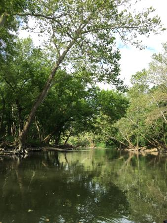Noblesville, IN: Tree lined river, you will see lots of birds and turtles.