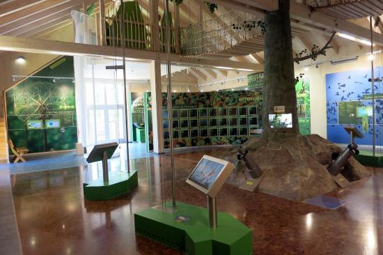 Baumkronenpfad: Ausstellung im Zentrum
