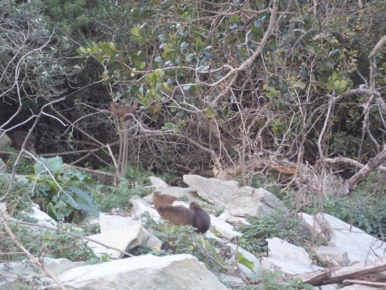 Tsitsikamma National Park照片