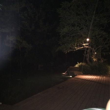 팜 앳 산 베니토 사진