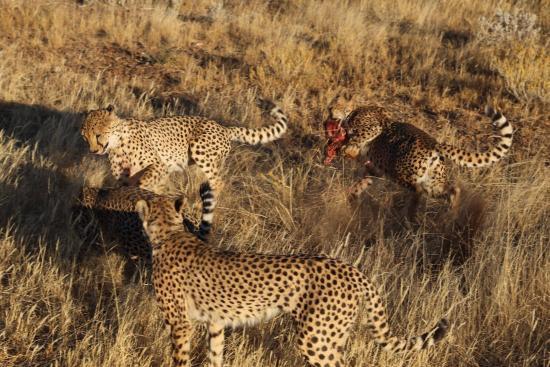Kamanjab, ناميبيا: photo4.jpg
