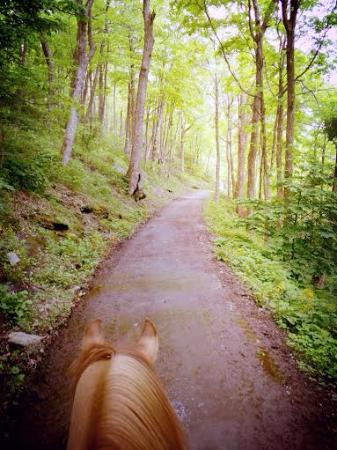Vx3 Trail Rides: The best view in the whole world - from between the ears of a horse!