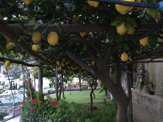 Casa Soriano: Entrouré de citrons!