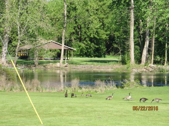 Coldwater, MI: Geese feeding near entrance and view of nearby park in southern cemetery.