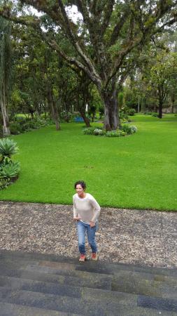 Hacienda Cusin: Jardines de la hacienda