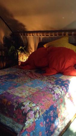 Landers House: It was La Noche room. I was pleasantly surprised by how this room was designed and I just LOVED