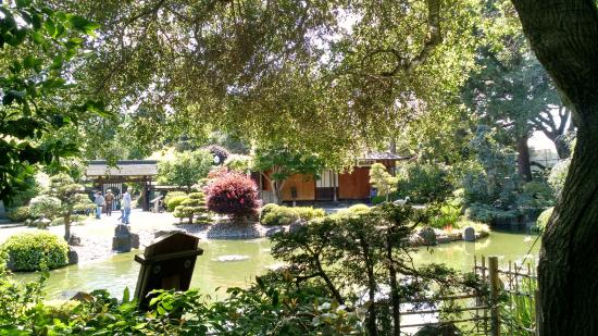 San Mateo, CA: Back view of the pond