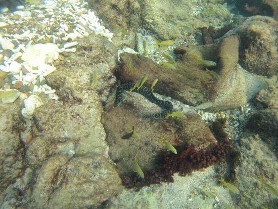 Sabana Westpunt, Curazao: eel