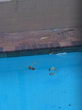 Ambassador Motor Inn: Rubbish in pool
