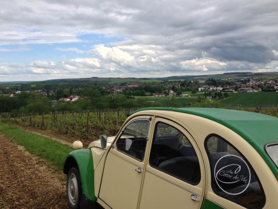 Chichee, Francia: Vineyard tour May 2016