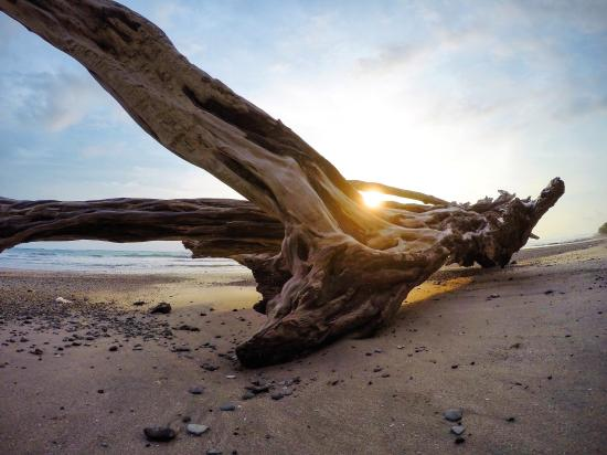 Shaka Beach Retreat: Monkey Business