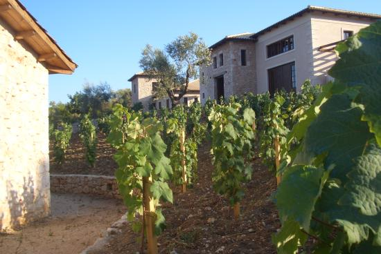 Lefkas Earth Winery