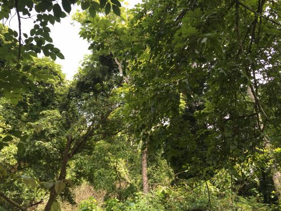 Orange County, Coorg: Dubare forest in nature walk