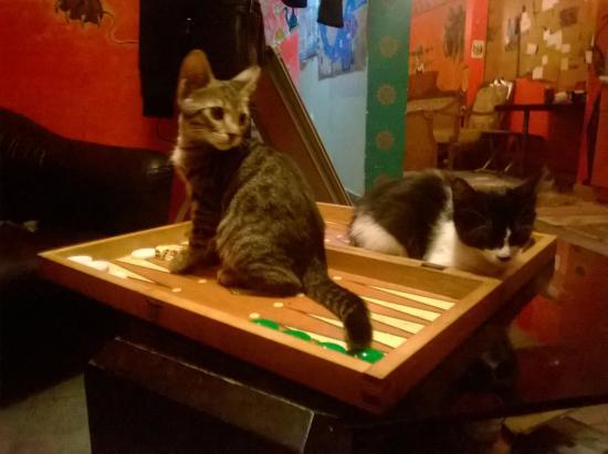 Stray Cat Hostel Photo