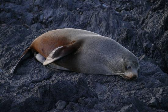 Wairarapa, Selandia Baru: Lazy Bum