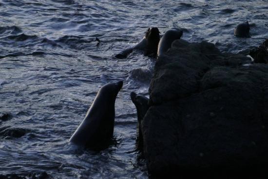 Wairarapa, Selandia Baru: Seals