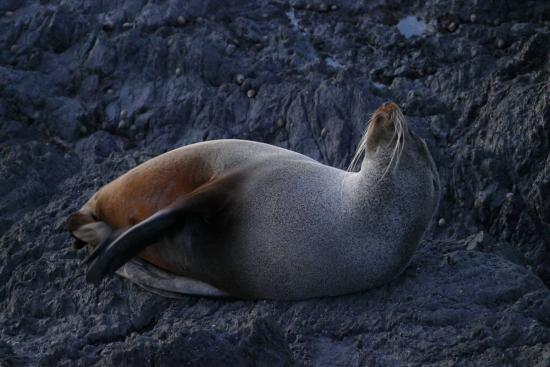 Wairarapa, Selandia Baru: Seal
