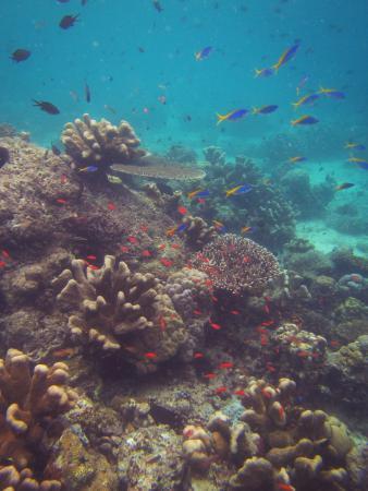 Семпорна, Малайзия: the reef around Sipadan