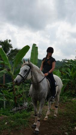 Тегалаланг, Индонезия: Riding Yogi's new horse Raja. Such a cutie and so well behaved!