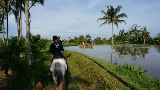 Тегалаланг, Индонезия: Riding through rice fields.