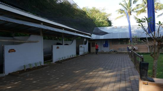 Тегалаланг, Индонезия: The stable