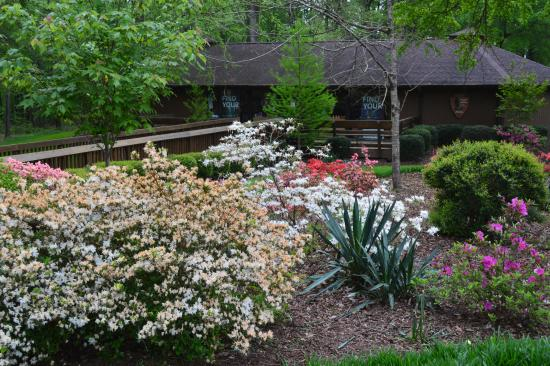 Ninety Six, SC: Landscaping in the foreground of the book store