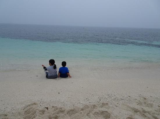 Udo: 紅藻團块海濱