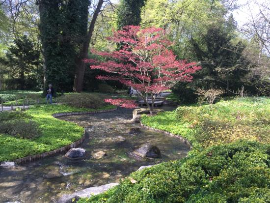 bl tenpracht picture of botanischer garten japan