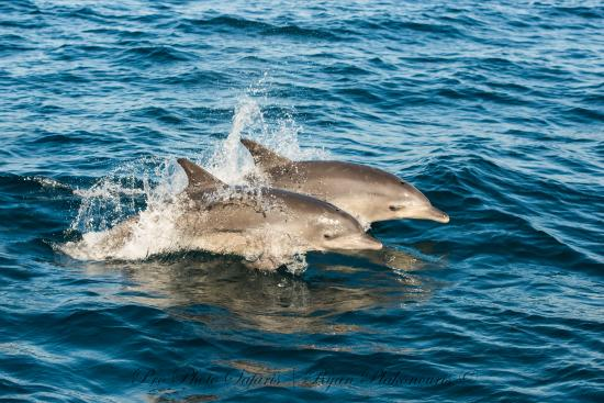 Port Elizabeth, Güney Afrika: Lloyd is an expert in photographing Dolphins and Whales