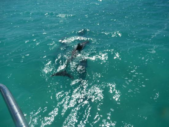 North Caicos: The dolphins!