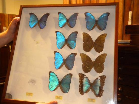 Glasgow Museums Resource Centre: Butterfly collection