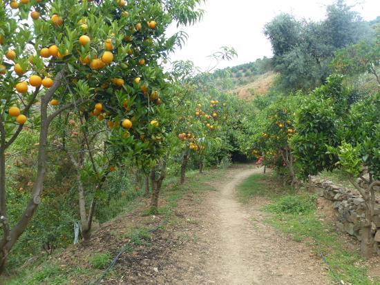 Orangerie - Picture of Botanical Park & Gardens of Crete ...