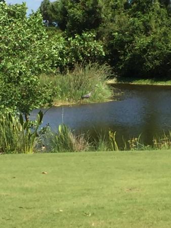 Raptor Bay Golf Club: photo2.jpg