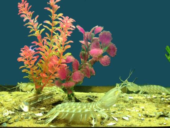 Rockport, TX: Sea Lice