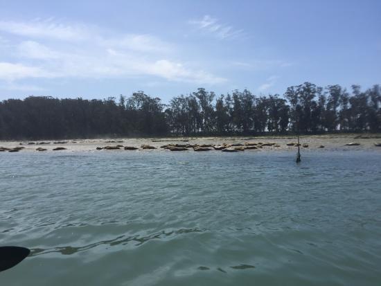 Monterey Bay Kayaks & Standup Paddleboards